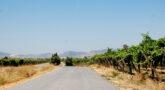 La Concejalía de Agricultura comienza el servicio de desbroce de caminos.