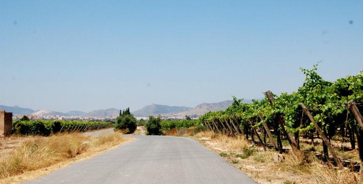 La Concejalía de Agricultura comienza el servicio de desbroce de caminos
